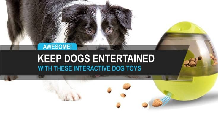 dog toys to keep dogs entertained interactive dog toys best