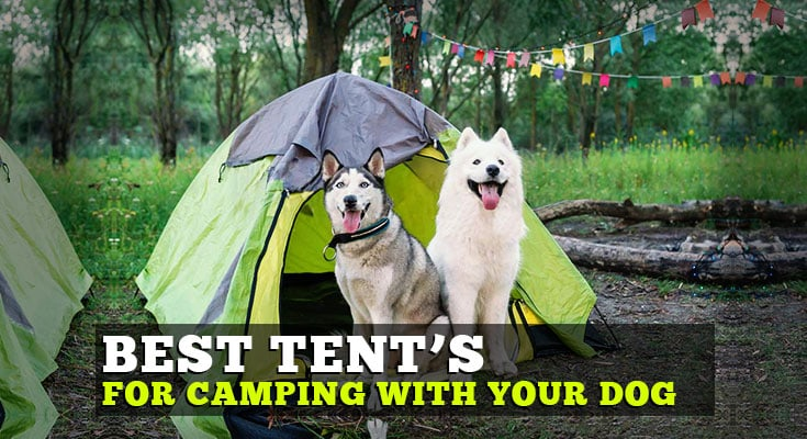 best tent for camping with your dog big dogs
