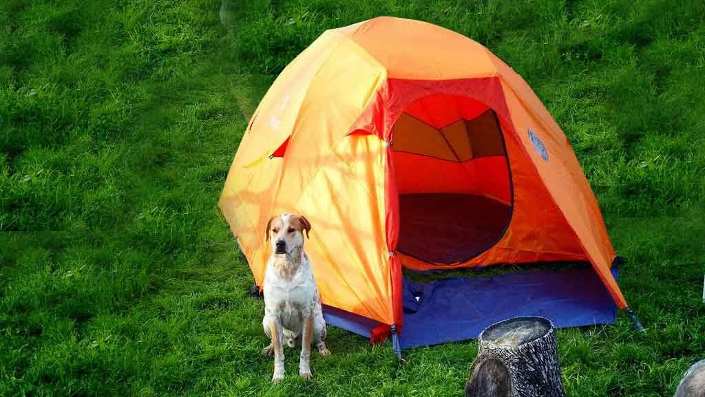 camping with your dog in a tent