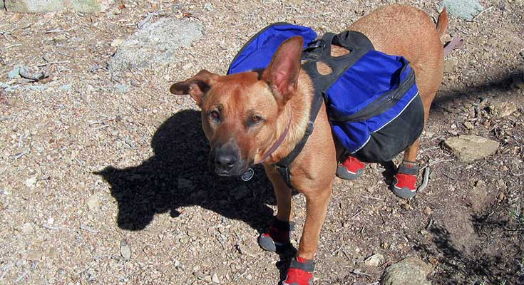 how to backpack with a dog dog guide choosing a pack