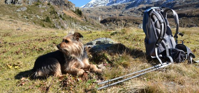 How to keep your dog cool while hiking