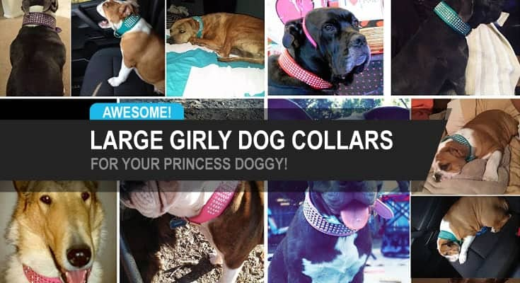 large girly dog collars for your princess doggy