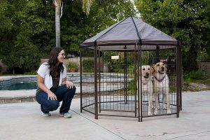 outdoor dog playpen gazebo with roof