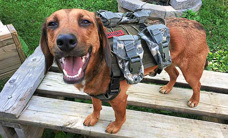 OneTigris tactical dog vest with molle hand grenade pouches