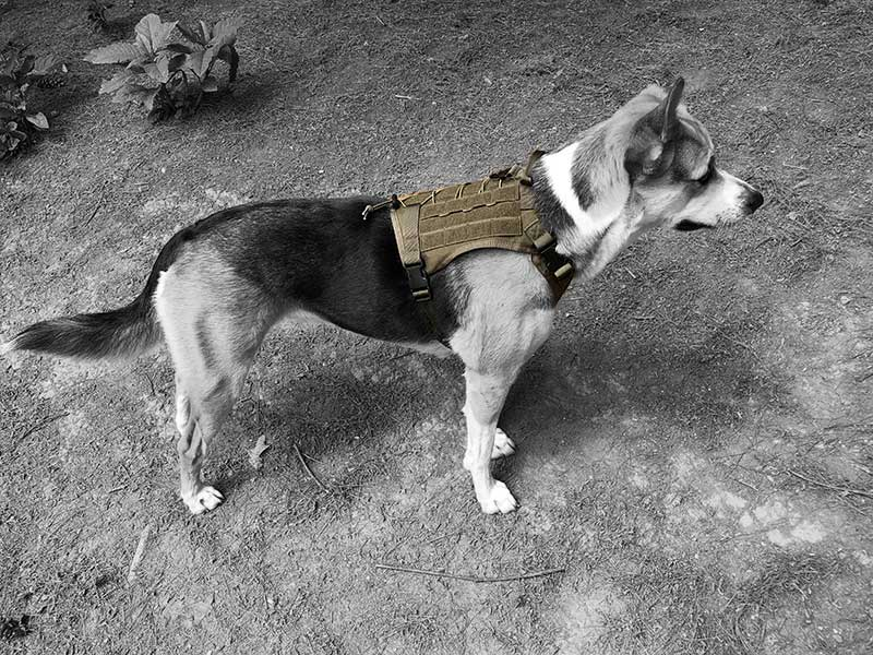 daisy tactical dog vest breathability