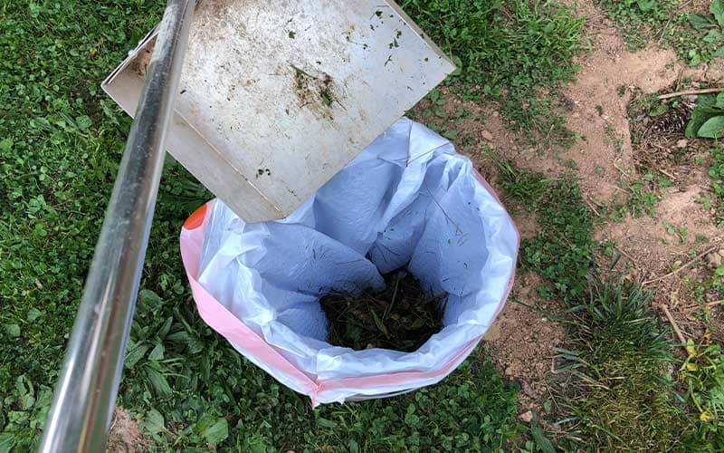 how to get rid of dog poop in your yard pick up the visible poop first
