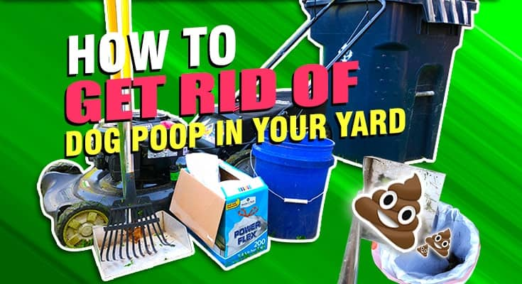 how to get rid of dog poop in your yard thoroughly
