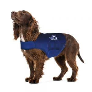 mellow shirt for high strung dogs with anxiety to calm them down