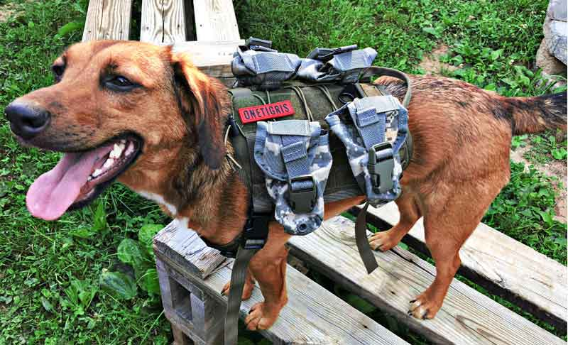 onetigris best tactical dog vest with molle pouches