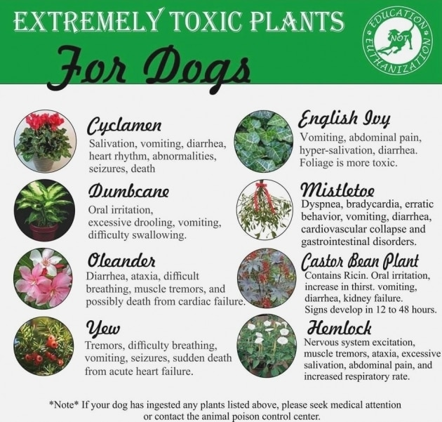 poisonous plants can harm your dog puppy proofing your apartment or home