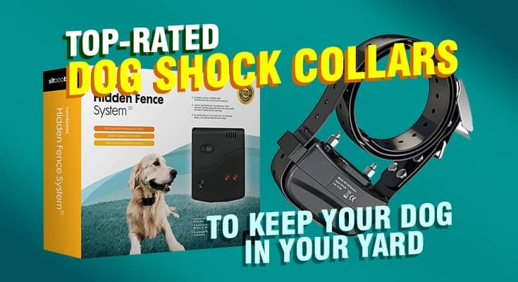 top rated dog shock collar to keep your dog in your yard from escaping 3