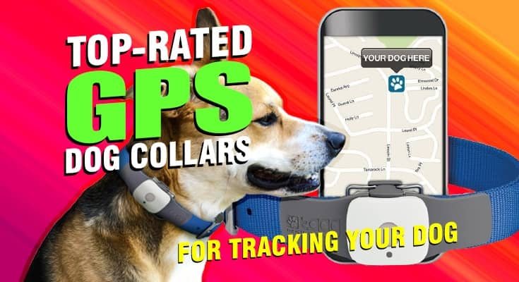 top rated gps dog collars for tracking your dog hiking hunting