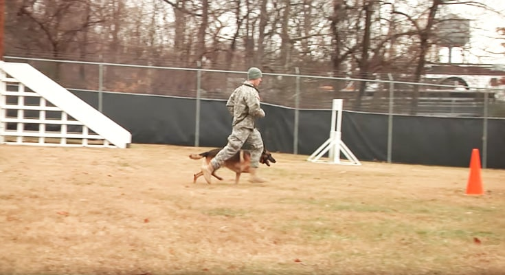 K9 certification training course military working dog