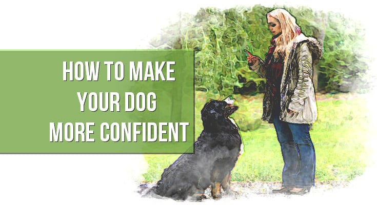 how to make your dog more confident