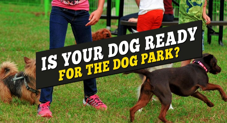 is your dog ready for the dog park off leash dog guide