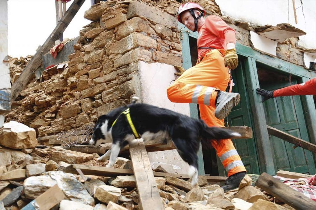 Volunteer search and rescue dog searching through rubble