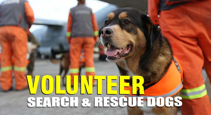 volunteer search and rescue dogs