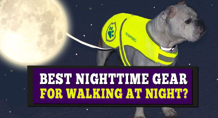nighttime safety gear for dogs walking dog at night