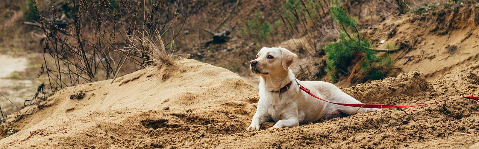takings dogs camping taking a puppy camping tips