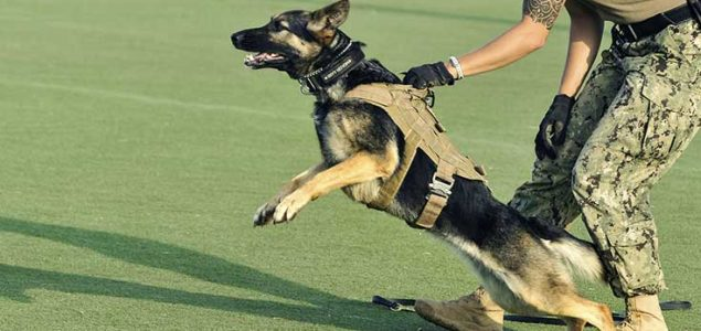 best tactical dog vest military working dog